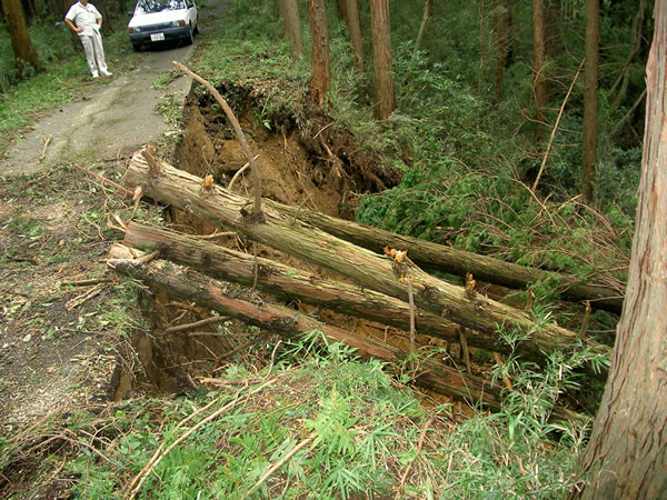 【公共緊急工事】 林道災害復旧
